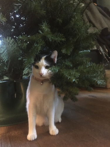 Sophie's Christmas Tree